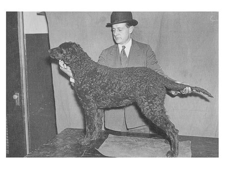 Brits Invade 1936 Westminster Kennel Club Dog Show