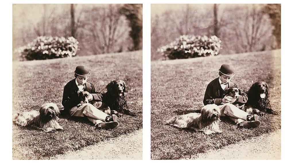 England's Prince Leopold, sitting with 3 dogs, one of which appears to be a curly coated retriever or a curly coated retriever mix. Photograph from 1865.
