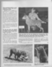 Page three of an interview with Mildred Buchholz of Chesachobee Chesapeake Bay Retrievers
