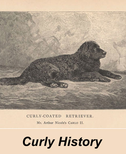 CurlyCarloII1890-owned-by-Nicoll's.jpg