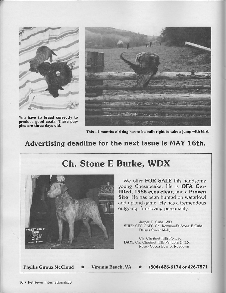 Page 4 of an interview with Mildred Buchholz of Chesachobee Chesapeake Bay Retrievers and an ad for the Ch. Stone E. Burke, WDX