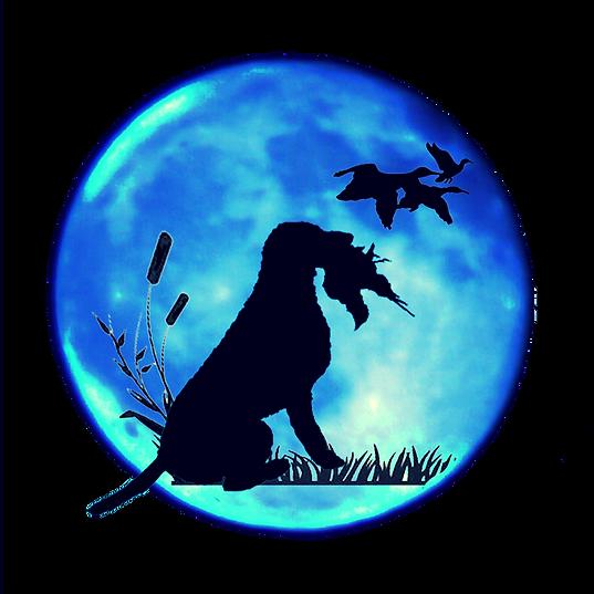 PlanetCurly.com Logo