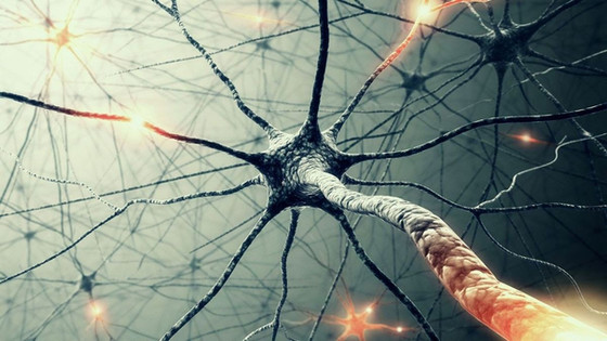 Neurons, Networks, & Necessary