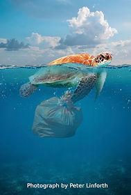 Plastics turtle.jpg
