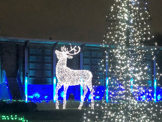 The Detroit Zoo Comes Alive on Winter Nights