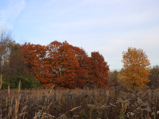 Park reviews: Douglas Evans Nature Preserve