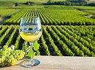 vin_de_provence.jpg