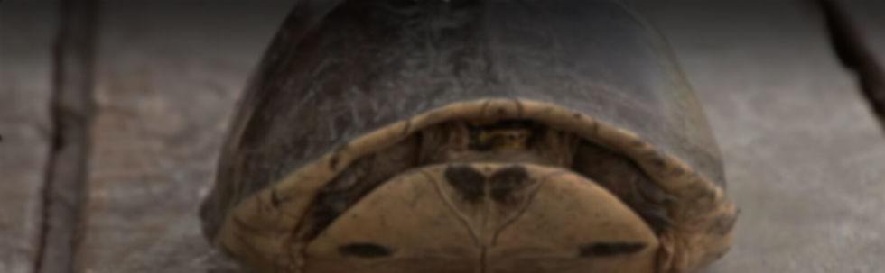 BAN-TURTLE VIDEO STILL.jpg