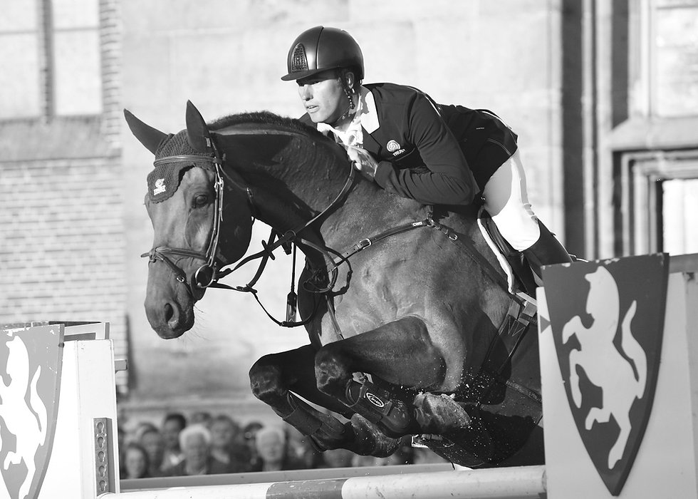 horse-1235911_1920.jpg