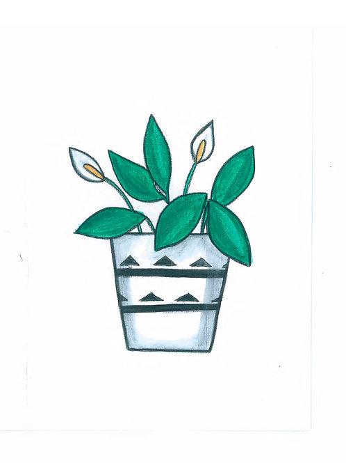 Peace Lily Print
