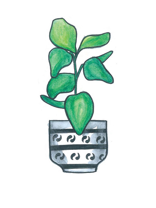 Rubber Tree Plant Print