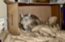 luddie in a box jan 2019.jpg