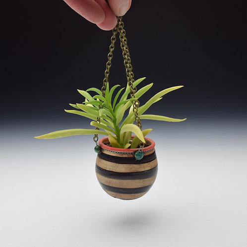 Stripy Blue Dot Succulent