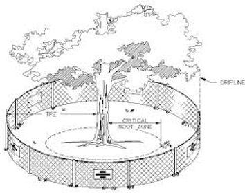Tree Protect 2.jpg
