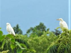 Cockatoo & Egret 2020