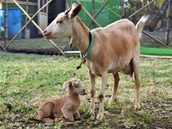 Nanny and baby