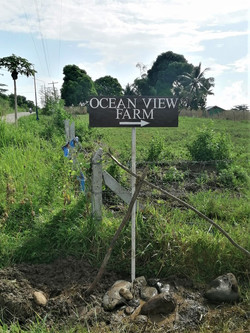 Ocean View Farm Sign