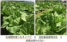 top_image13.jpg