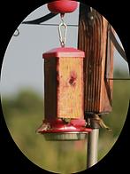 hummingbird Feeder Cedar.heic