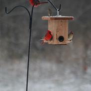 Bird Feeders Cardinal