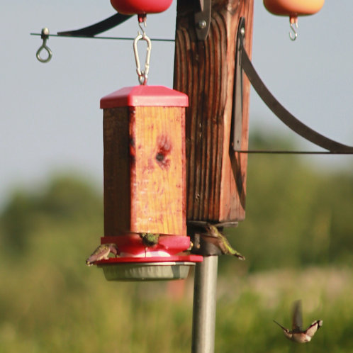 Hummingbird Feeder Bonanza Package