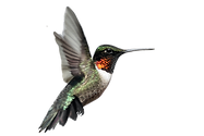 hummingbird_edited_edited_edited.png