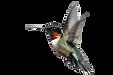 hummingbird_edited_edited.png