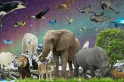 Meet Your Spirit Animal Visualisation