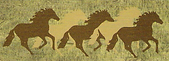 Springs_Ranch_Logo