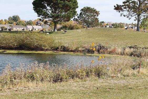 Golf_Course_Lake