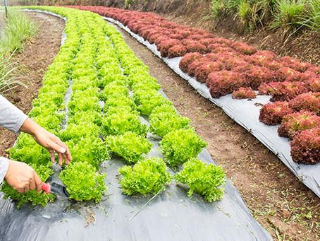Brasil passa a ter regras de rastreabilidade para frutas e vegetais