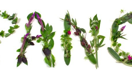 Banquete das PANC – Da natureza ao prato os Chefs criam receitas Nutritivas e Gourmet - parte 2