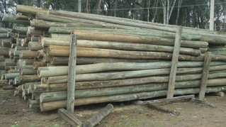 CEEE Equatorial doa postes de madeira para reconstrução de pontes em Piratini