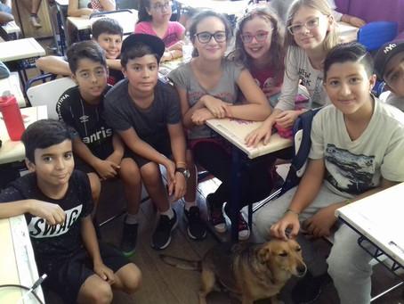 Cadela permanece em sala de aula e recebe carinho dos alunos