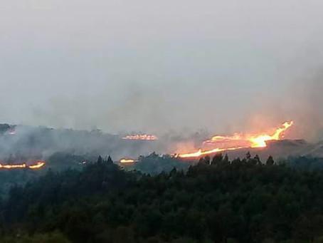 Incêndio destrói mato de eucalipto na Santa Clara, Interior de Canguçu