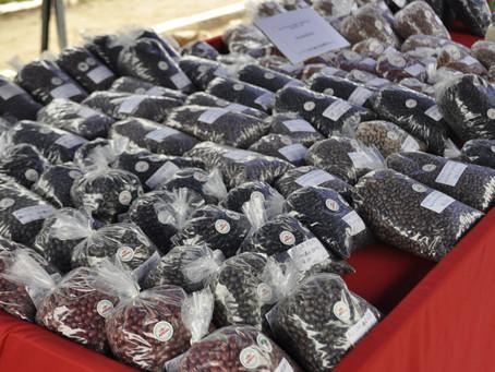 Feira do feijão orgânico é atração em Piratini