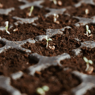 Soil Healing