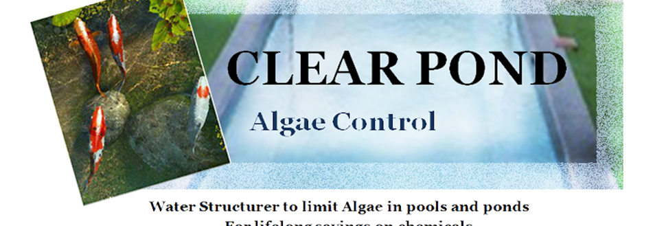 Clear Pond