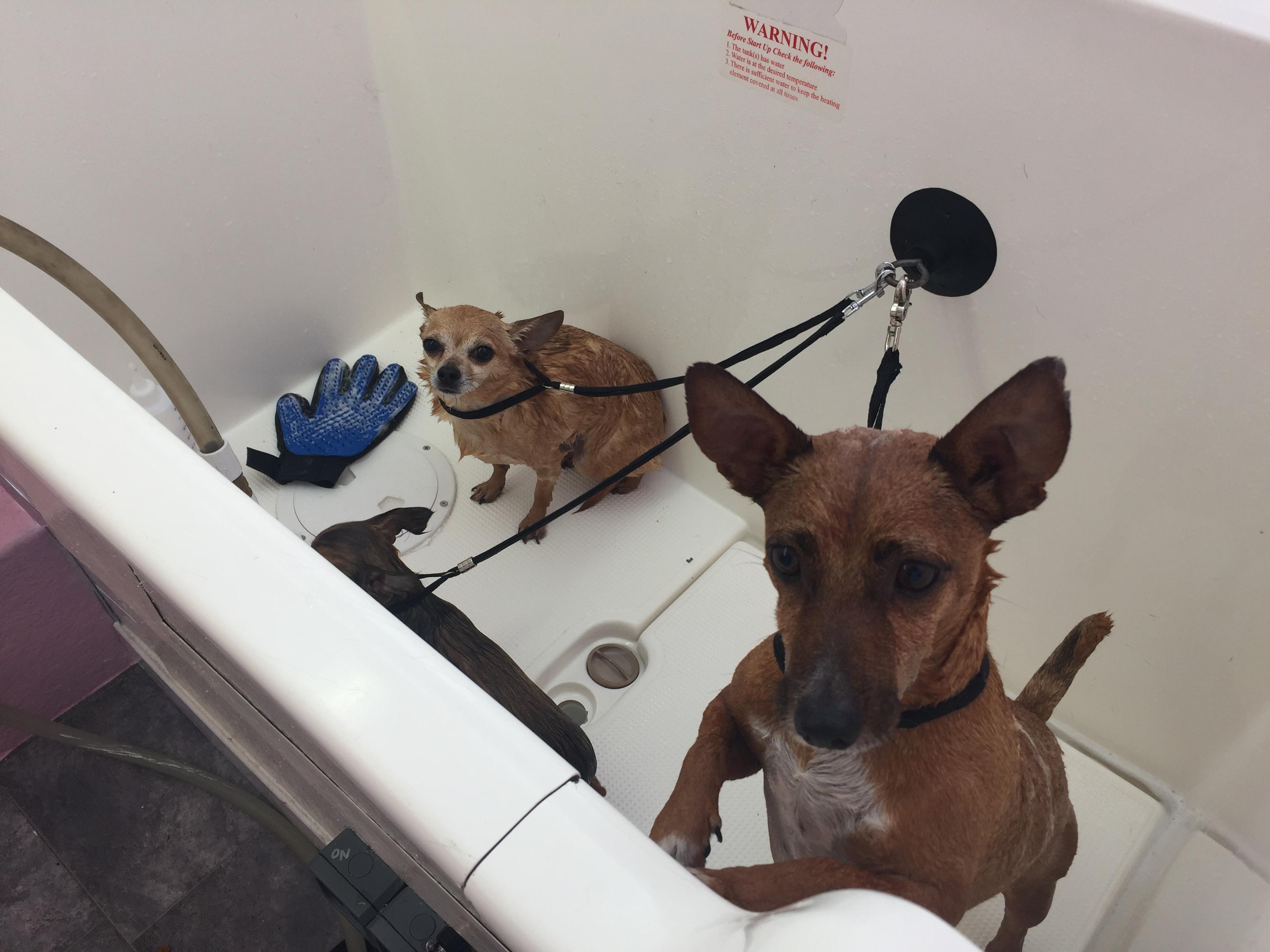 Dog wash time!