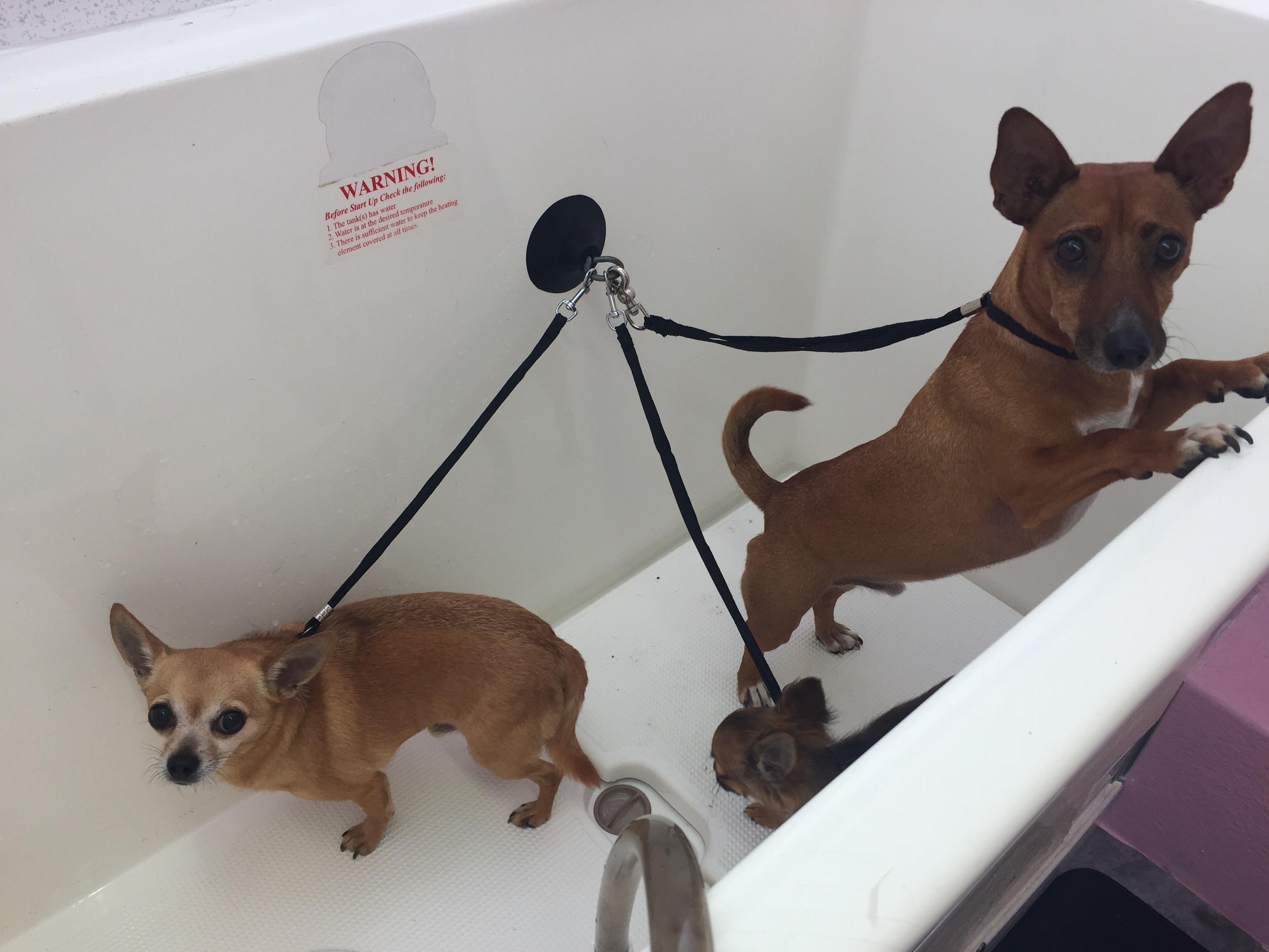 Dog grooming service Ibiza