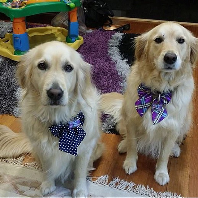 Sisters Abbie and Pip looking dressed to the canines ❤️🐶