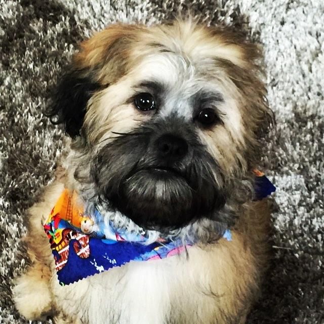 Cute puppy alert!! 😍