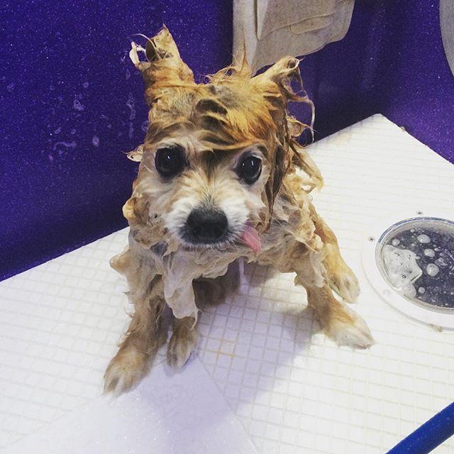 Bath time for Benji!💦🐶❤️