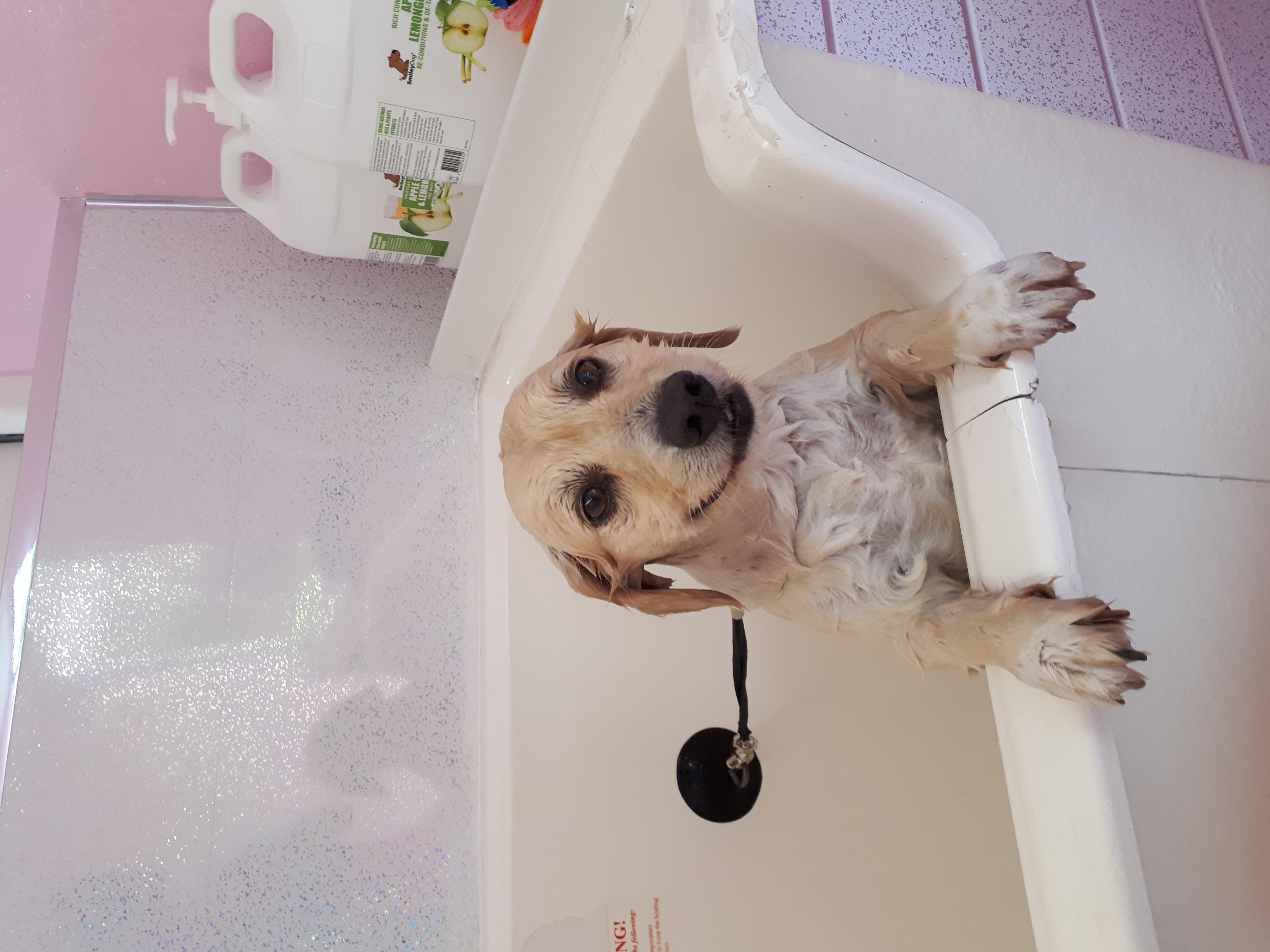 Marley enjoying a wash