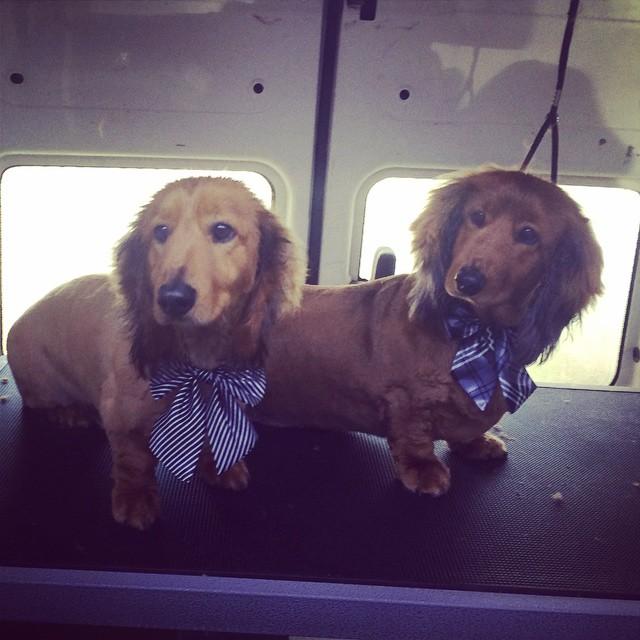 Looking good Heinz and Ziggy 😄