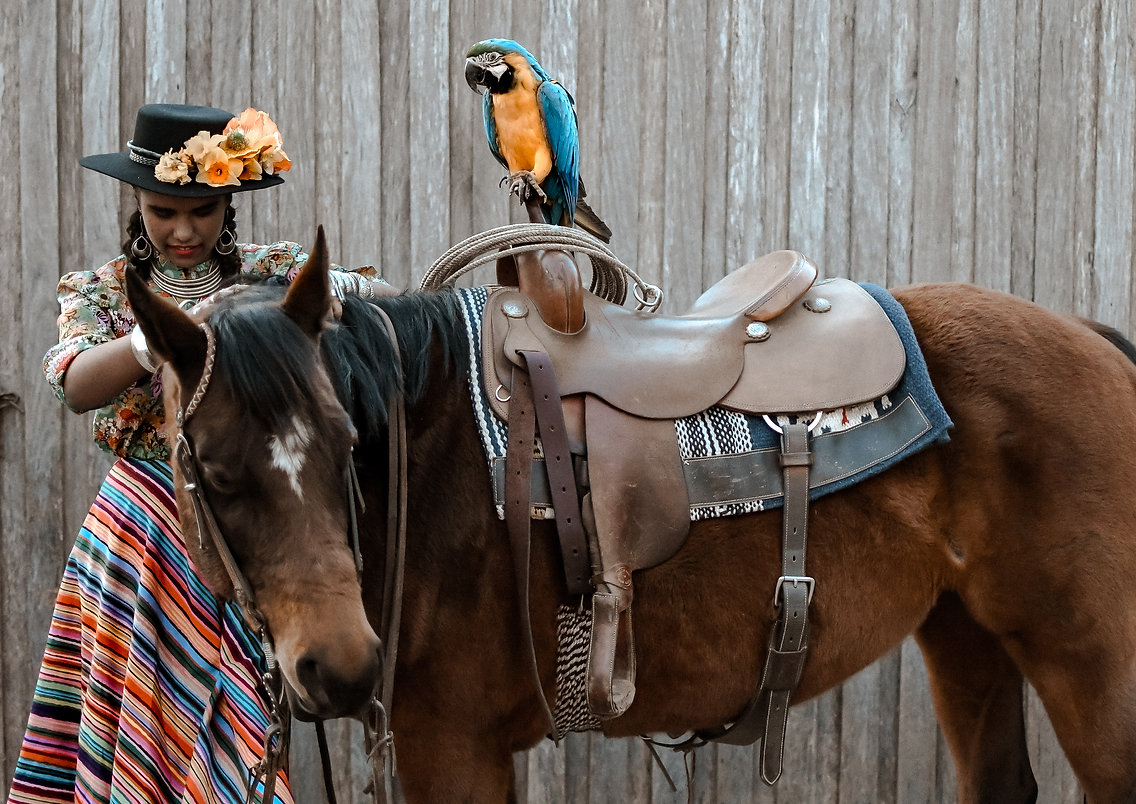 model macaw horse