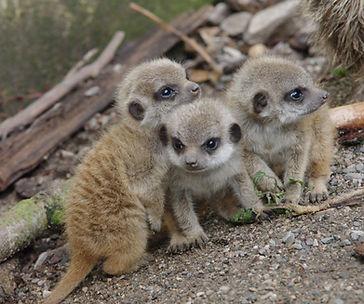 22.Lakeland Wildlife Oasis.jpg