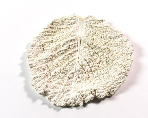 White Cabbage Leaf