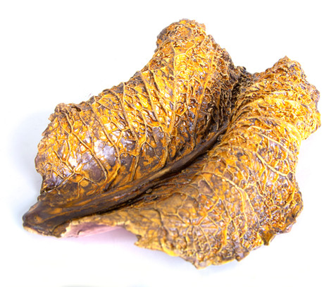 Brown cabbage leaves