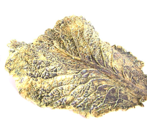 Green cabbage leaves
